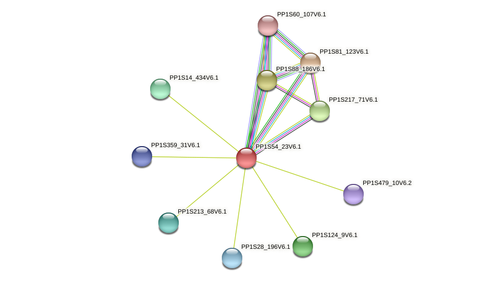 PP1S54_23V6.1 protein (Physcomitrella patens) - STRING interaction network