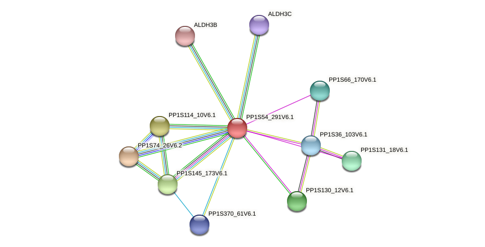 PP1S54_291V6.1 protein (Physcomitrella patens) - STRING interaction network