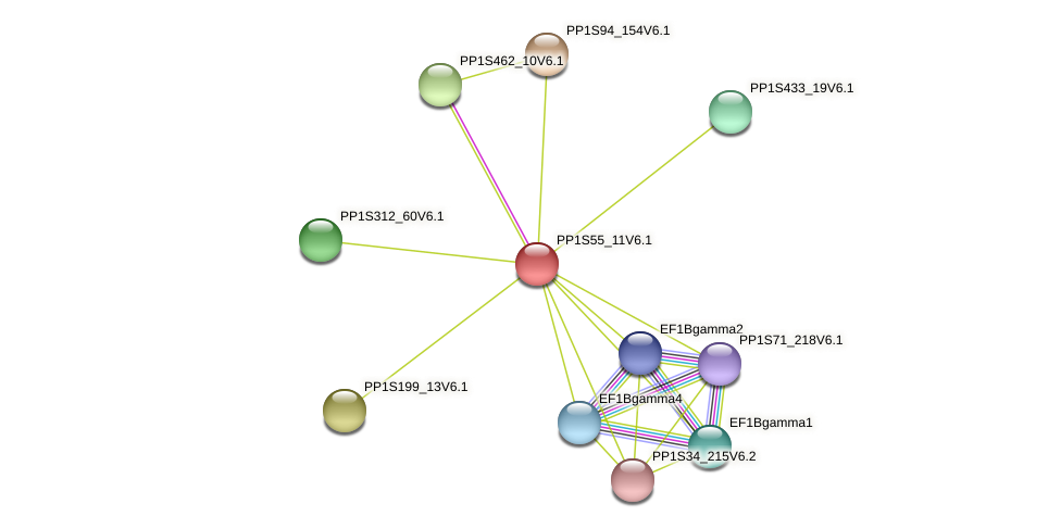 PP1S55_11V6.1 protein (Physcomitrella patens) - STRING interaction network