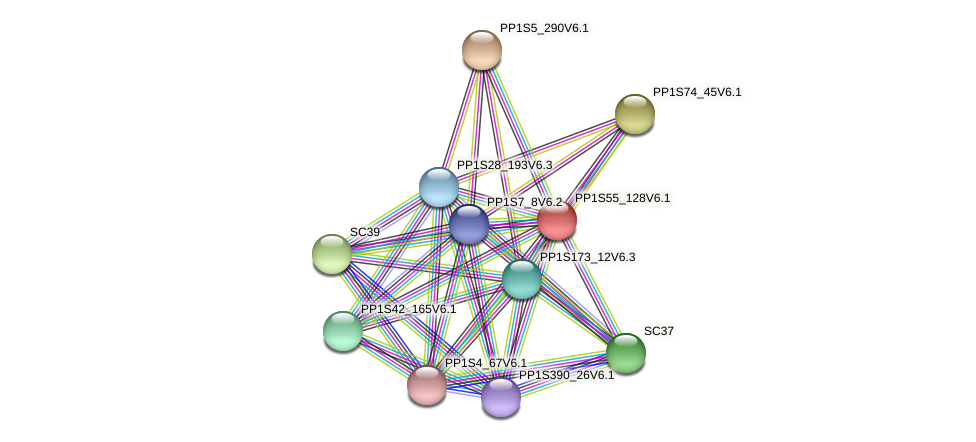 PP1S55_128V6.1 protein (Physcomitrella patens) - STRING interaction network