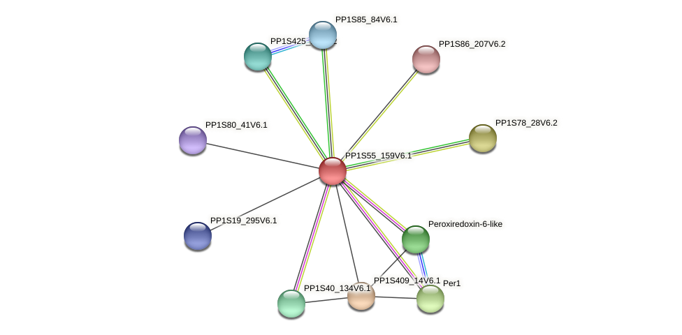 PP1S55_159V6.1 protein (Physcomitrella patens) - STRING interaction network