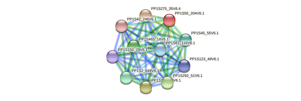 PP1S55_204V6.1 protein (Physcomitrella patens) - STRING interaction network