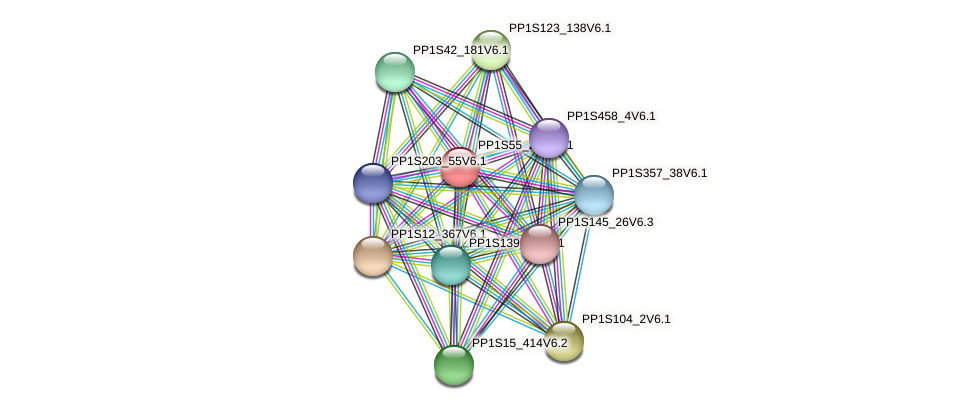 PP1S55_244V6.1 protein (Physcomitrella patens) - STRING interaction network