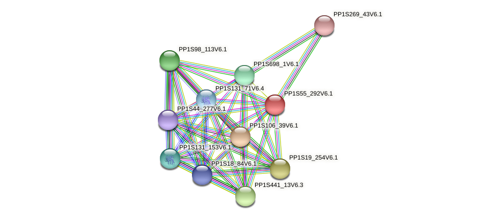PP1S55_292V6.1 protein (Physcomitrella patens) - STRING interaction network