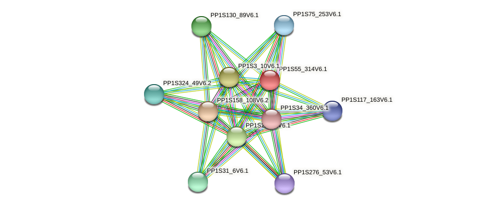 PP1S55_314V6.1 protein (Physcomitrella patens) - STRING interaction network