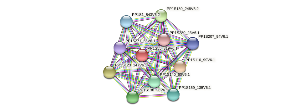 PP1S55_319V6.1 protein (Physcomitrella patens) - STRING interaction network