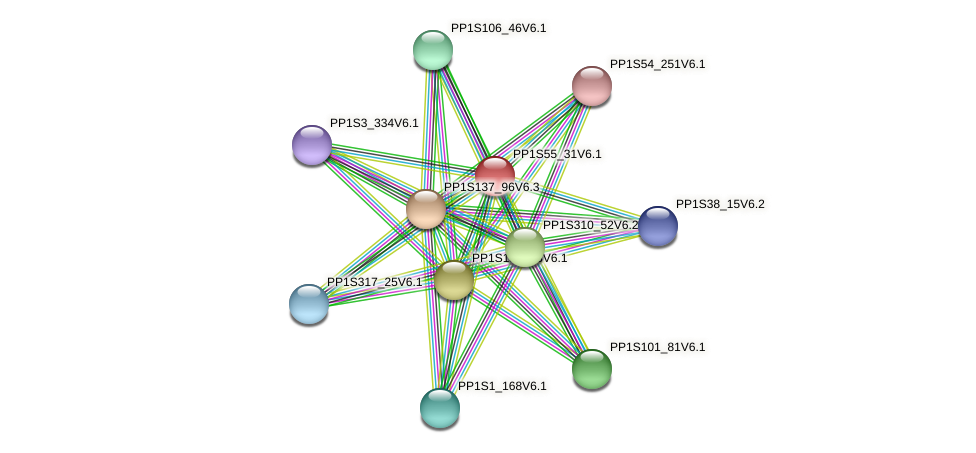 PP1S55_31V6.1 protein (Physcomitrella patens) - STRING interaction network