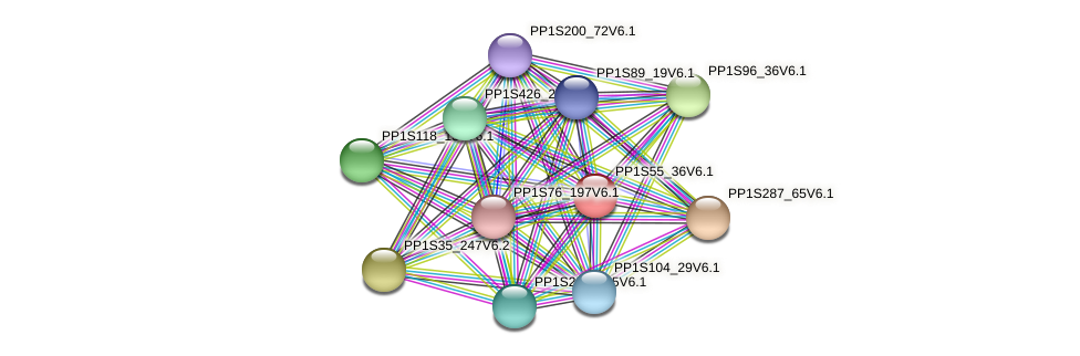 PP1S55_36V6.1 protein (Physcomitrella patens) - STRING interaction network