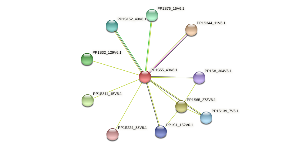 PP1S55_43V6.1 protein (Physcomitrella patens) - STRING interaction network