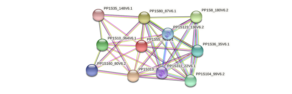 PP1S55_70V6.1 protein (Physcomitrella patens) - STRING interaction network