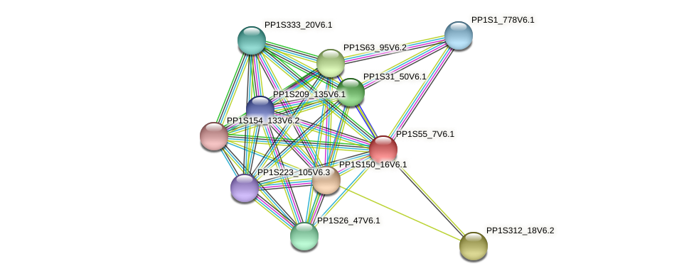 PP1S55_7V6.1 protein (Physcomitrella patens) - STRING interaction network