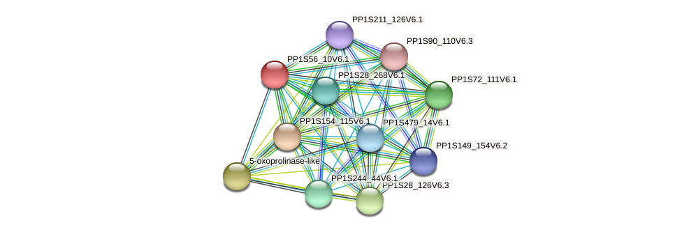 PP1S56_10V6.1 protein (Physcomitrella patens) - STRING interaction network