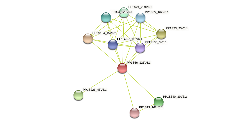 PP1S56_121V6.1 protein (Physcomitrella patens) - STRING interaction network