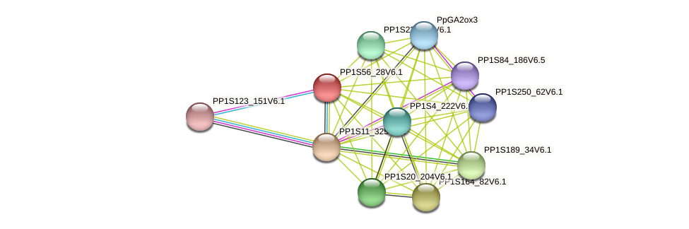 PP1S56_28V6.1 protein (Physcomitrella patens) - STRING interaction network