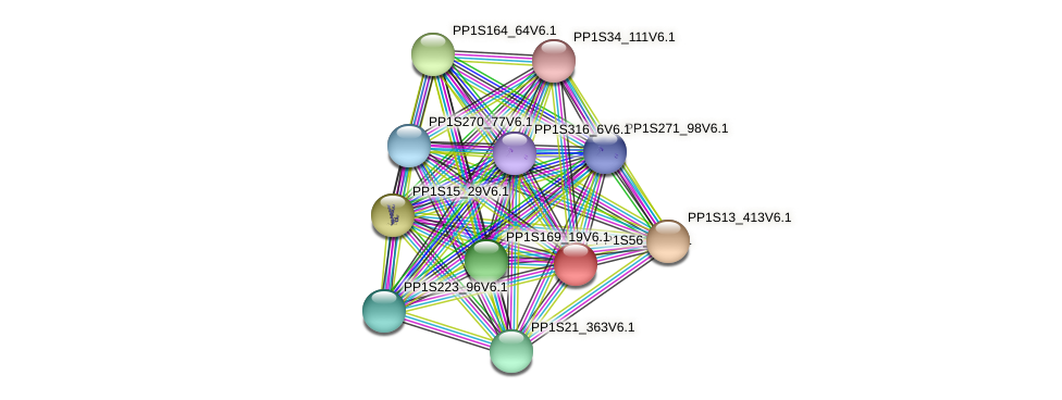PP1S56_39V6.1 protein (Physcomitrella patens) - STRING interaction network
