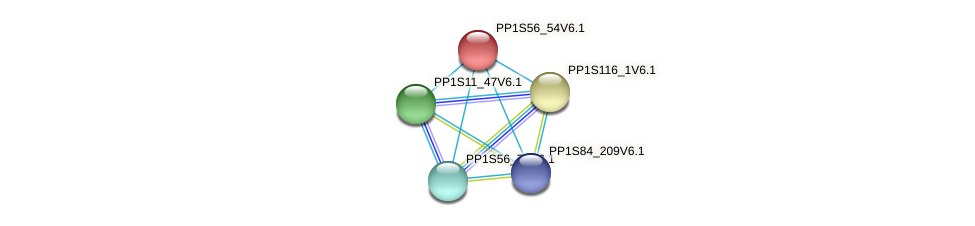 PP1S56_54V6.1 protein (Physcomitrella patens) - STRING interaction network