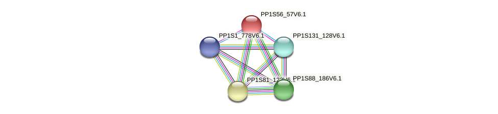 PP1S56_57V6.1 protein (Physcomitrella patens) - STRING interaction network