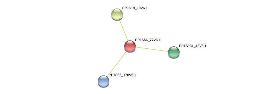 PP1S56_77V6.1 protein (Physcomitrella patens) - STRING interaction network