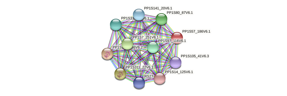 PP1S57_186V6.1 protein (Physcomitrella patens) - STRING interaction network