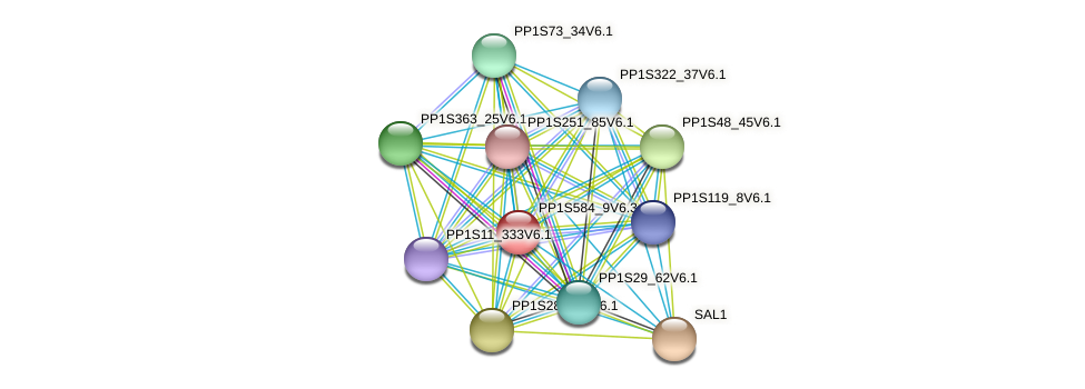 PP1S584_9V6.1 protein (Physcomitrella patens) - STRING interaction network