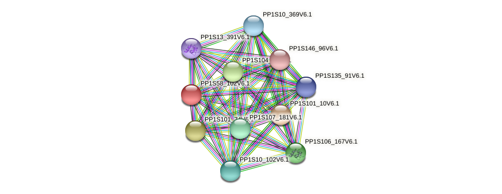 PP1S58_102V6.1 protein (Physcomitrella patens) - STRING interaction network