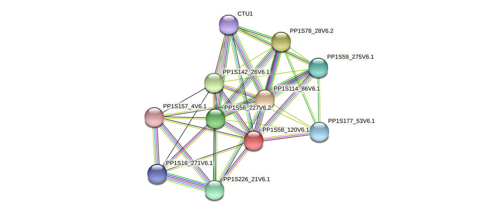 PP1S58_120V6.1 protein (Physcomitrella patens) - STRING interaction network