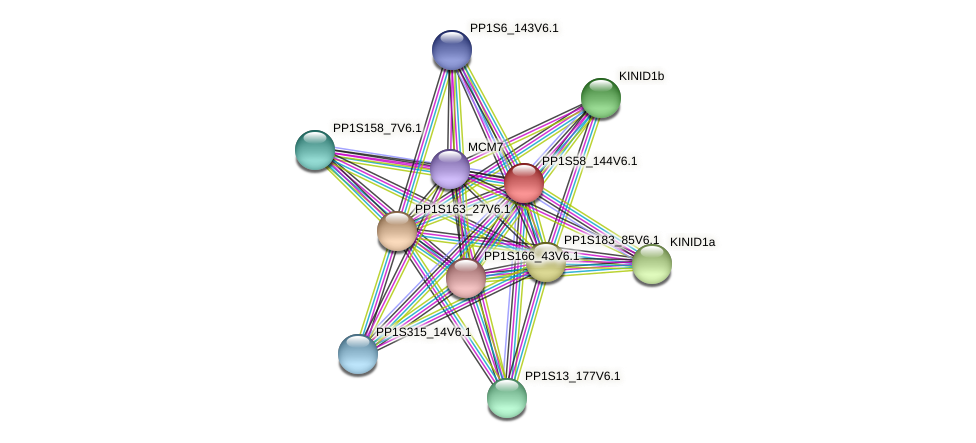 PP1S58_144V6.1 protein (Physcomitrella patens) - STRING interaction network
