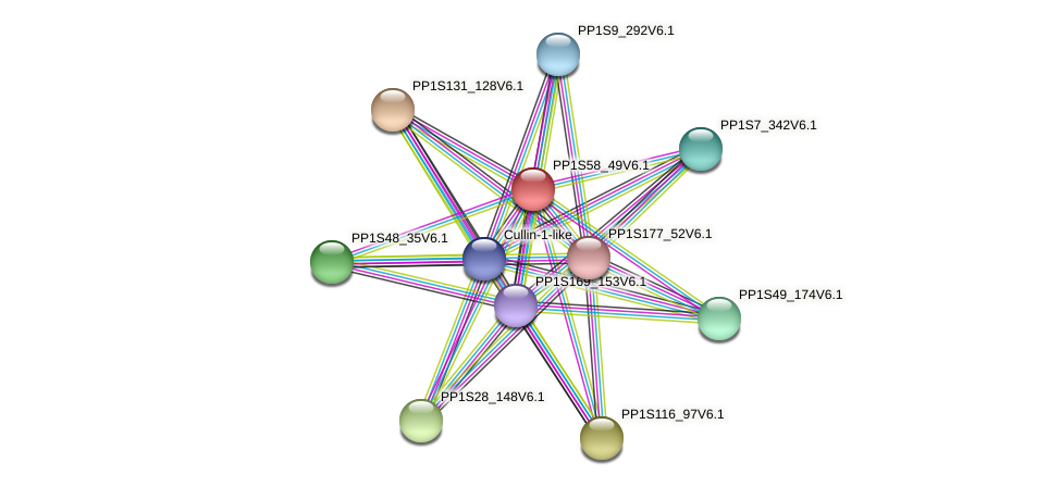 PP1S58_49V6.1 protein (Physcomitrella patens) - STRING interaction network