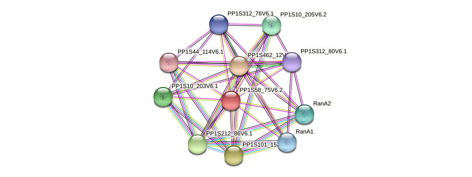 PP1S58_75V6.2 protein (Physcomitrella patens) - STRING interaction network
