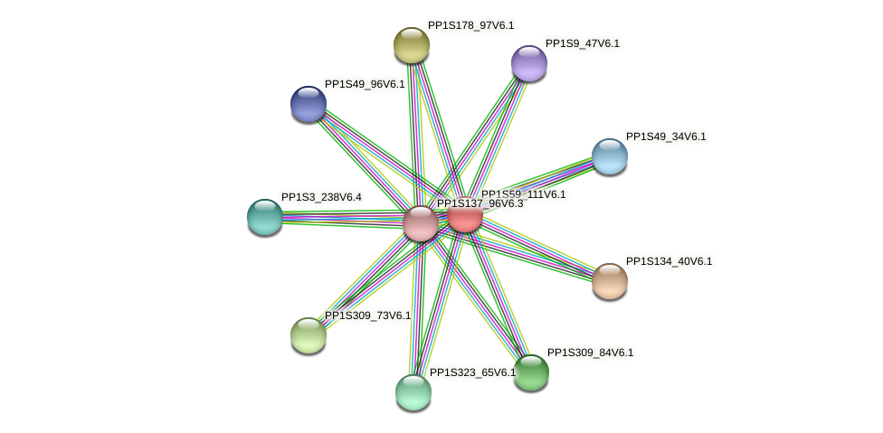 PP1S59_111V6.1 protein (Physcomitrella patens) - STRING interaction network