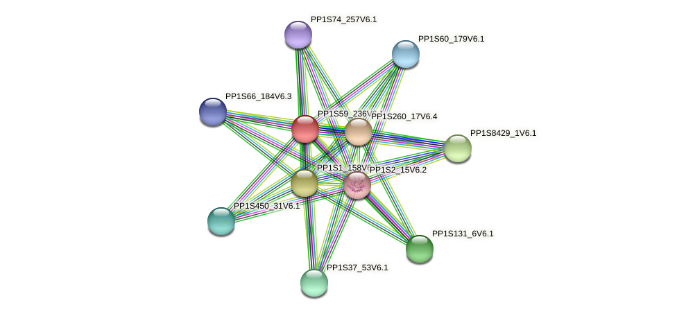 PP1S59_236V6.1 protein (Physcomitrella patens) - STRING interaction network