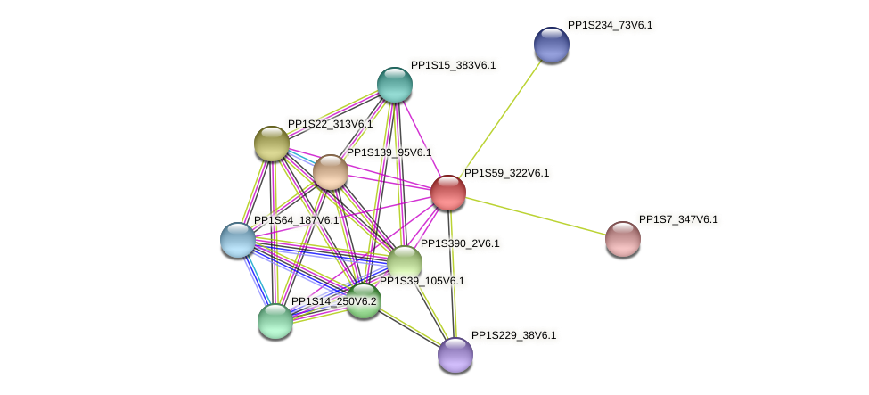 PP1S59_322V6.1 protein (Physcomitrella patens) - STRING interaction network