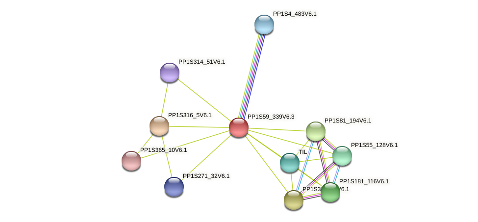PP1S59_339V6.1 protein (Physcomitrella patens) - STRING interaction network
