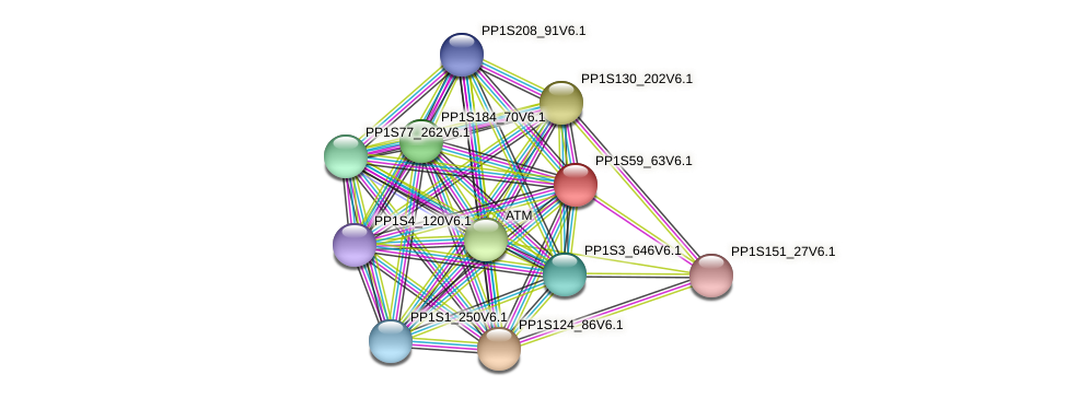 PP1S59_63V6.1 protein (Physcomitrella patens) - STRING interaction network