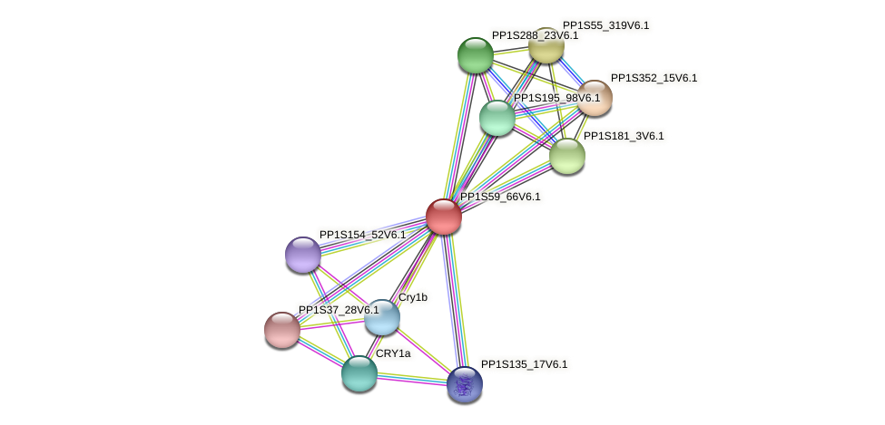 PP1S59_66V6.1 protein (Physcomitrella patens) - STRING interaction network