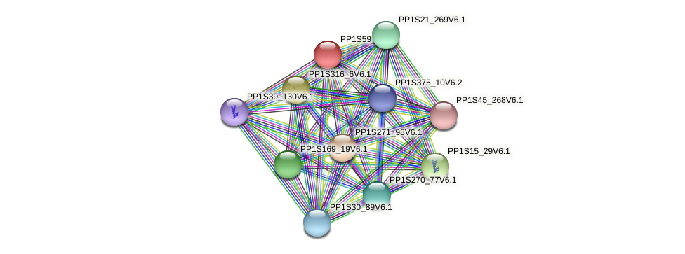 PP1S59_8V6.1 protein (Physcomitrella patens) - STRING interaction network