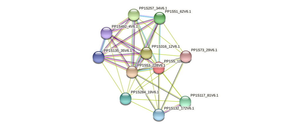 PP1S5_110V6.1 protein (Physcomitrella patens) - STRING interaction network