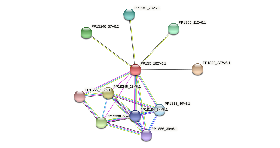 PP1S5_162V6.1 protein (Physcomitrella patens) - STRING interaction network