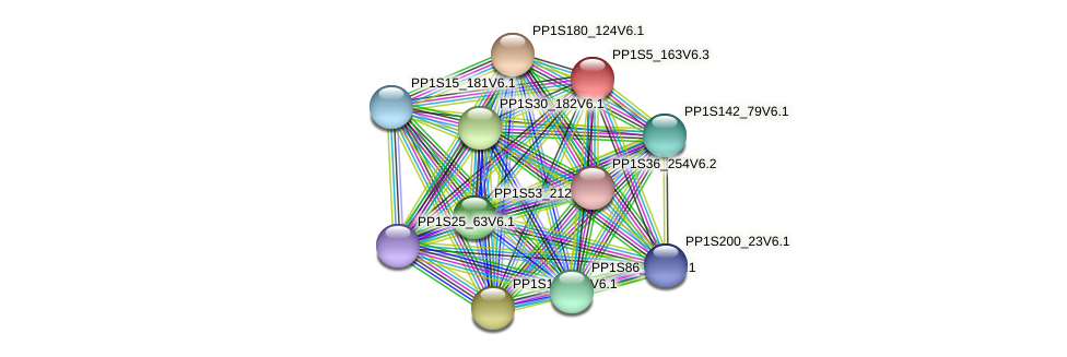 PP1S5_163V6.3 protein (Physcomitrella patens) - STRING interaction network