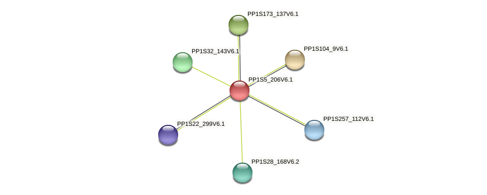PP1S5_206V6.1 protein (Physcomitrella patens) - STRING interaction network