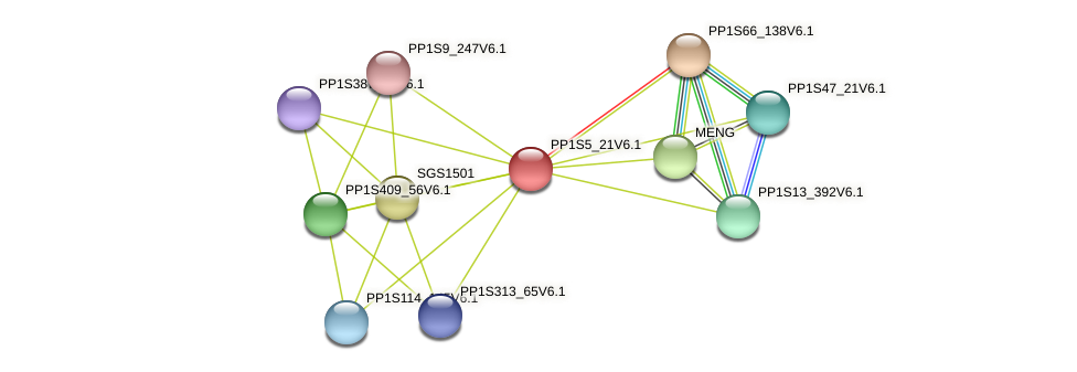 PP1S5_21V6.1 protein (Physcomitrella patens) - STRING interaction network