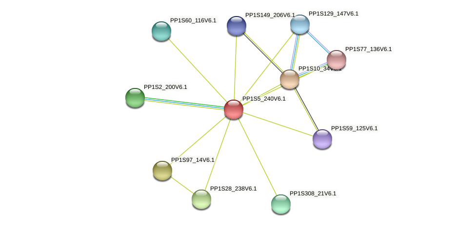 PP1S5_240V6.1 protein (Physcomitrella patens) - STRING interaction network