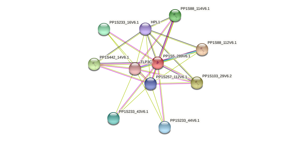 PP1S5_289V6.1 protein (Physcomitrella patens) - STRING interaction network