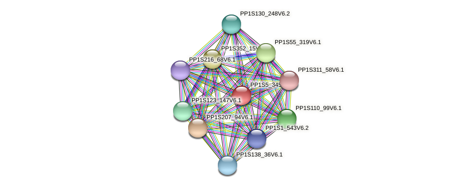 PP1S5_345V6.1 protein (Physcomitrella patens) - STRING interaction network