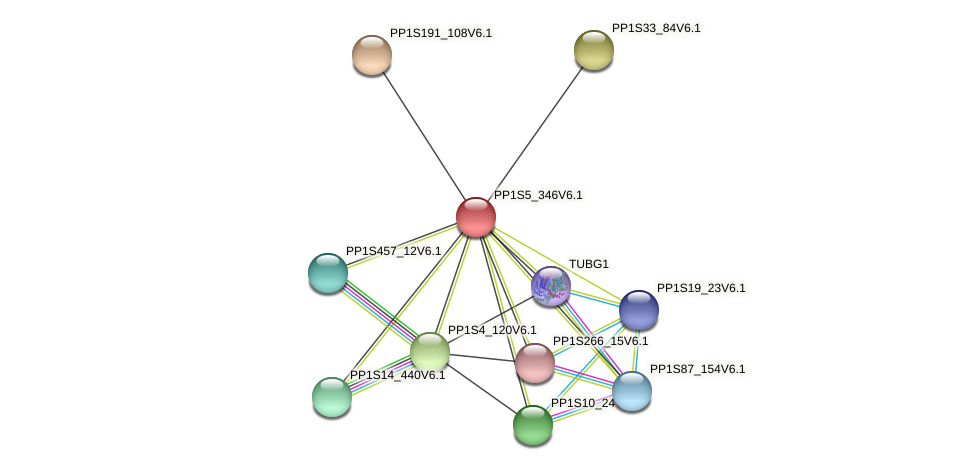 PP1S5_346V6.1 protein (Physcomitrella patens) - STRING interaction network