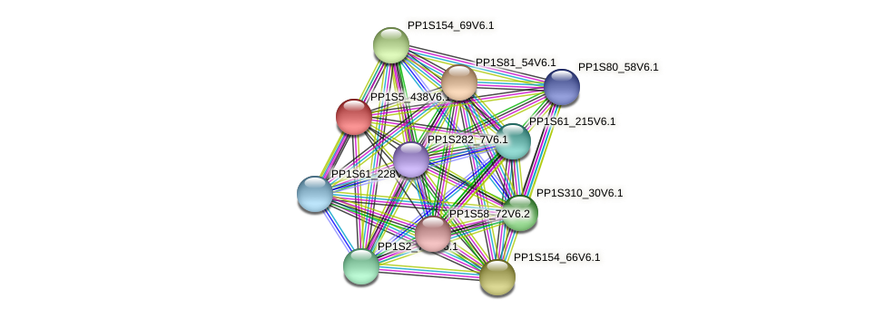 PP1S5_438V6.1 protein (Physcomitrella patens) - STRING interaction network