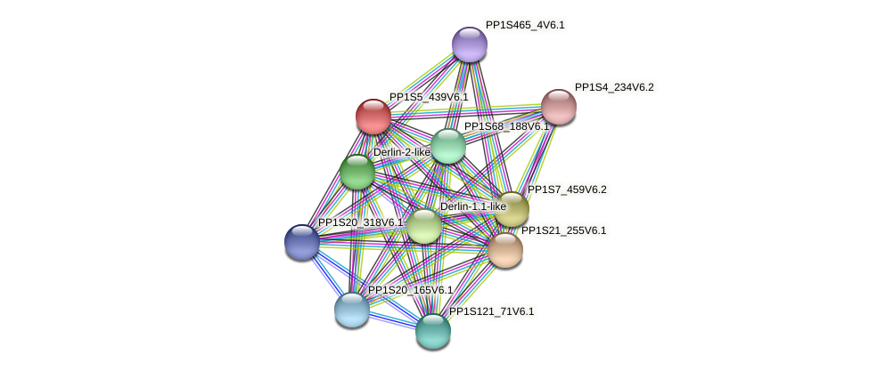 PP1S5_439V6.1 protein (Physcomitrella patens) - STRING interaction network