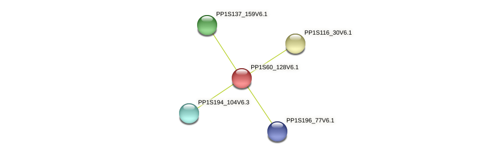 PP1S60_128V6.1 protein (Physcomitrella patens) - STRING interaction network