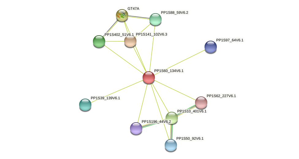 PP1S60_134V6.1 protein (Physcomitrella patens) - STRING interaction network