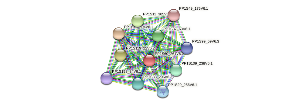 PP1S60_261V6.1 protein (Physcomitrella patens) - STRING interaction network